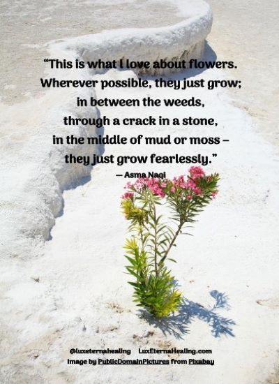 """This is what l love about flowers. Wherever possible, they just grow; in between the weeds, through a crack in a stone, in the middle of mud or moss - they just grow fearlessly."" ― Asma Naqi"