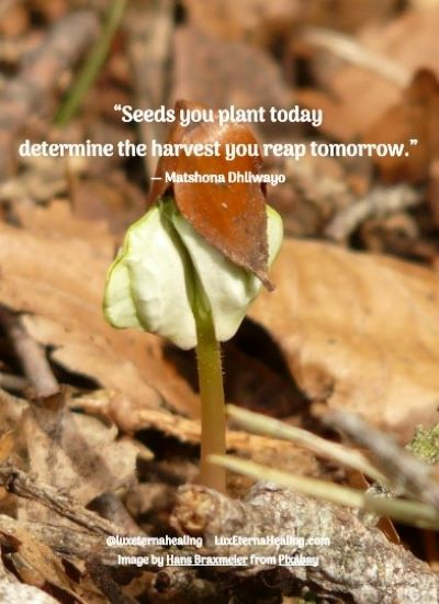 """Seeds you plant today determine the harvest you reap tomorrow."" ― Matshona Dhliwayo"
