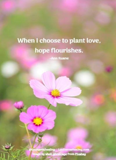 When I choose to plant love, hope flourishes. -Ann Ruane