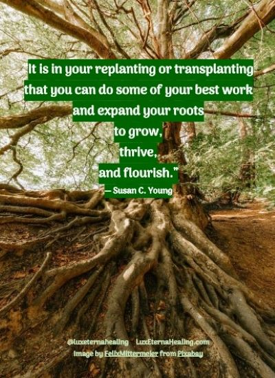 """It is in your replanting or transplanting that you can do some of your best work and expand your roots to grow, thrive, and flourish."" ― Susan C. Young"