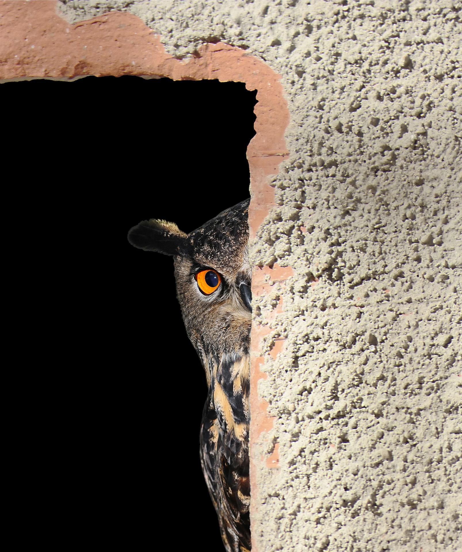 owl-2818971_1920