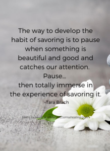 The way to develop the habit of savoring is to pause when something is beautiful and good and catches our attention. Pause... then totally immerse in the experience of savoring it. ~ Tara Brach